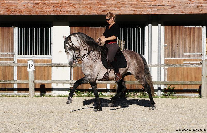 stage avec Isa Danne samedi 19 septembre 2015 – Equitation dressage Classique