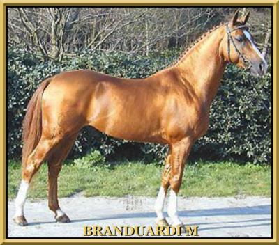 BRANDUARDI M
