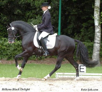Hilken's Black Delight (DRP)