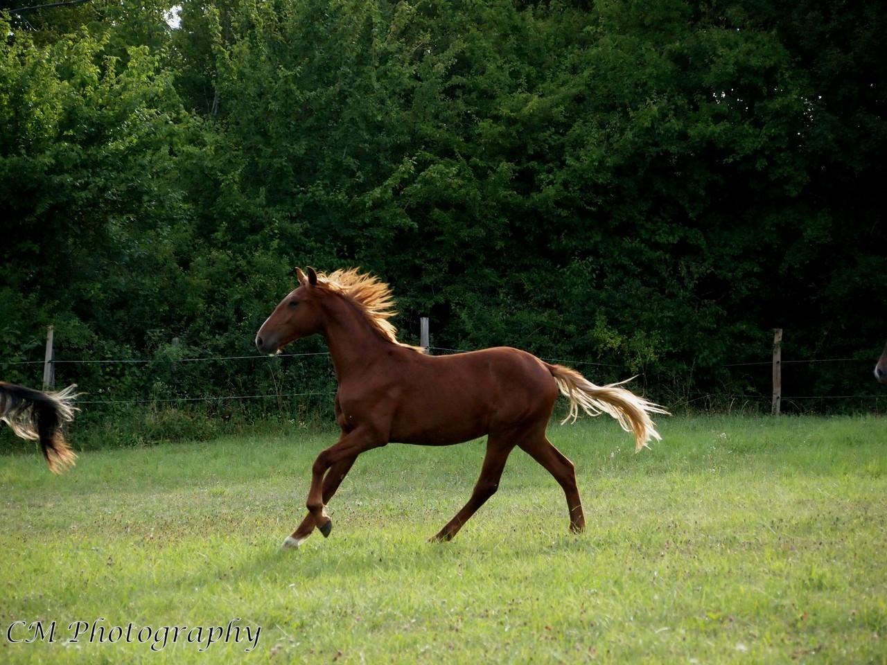 cheval dressage a confier