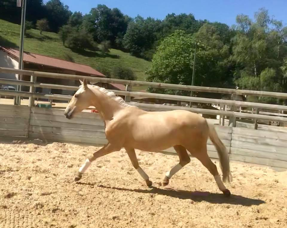 Gladonna - 2 ans